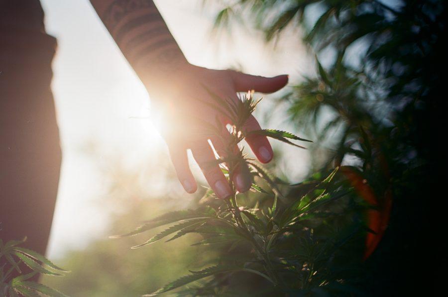 Whole-Plant Extraction and Full-Spectrum CBD ONDA Wellness