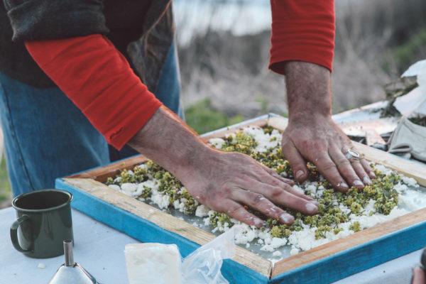 Juniper Ridge Essential Oils from plants