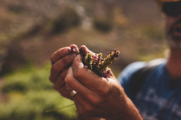 Plant Terpenes and Essential Oils
